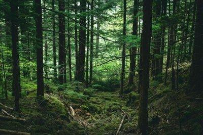 Survei dan Indeks Perhutanan Sosial: Jalan Menuju Kesejahteraan Rakyat dan Kelestarian Hutan