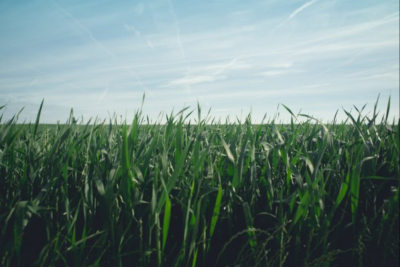 Menakar Strategi UMKM Agrikultur di Tengah Hantaman Pandemi