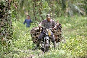 Menanti Berkah Biodiesel untuk Petani