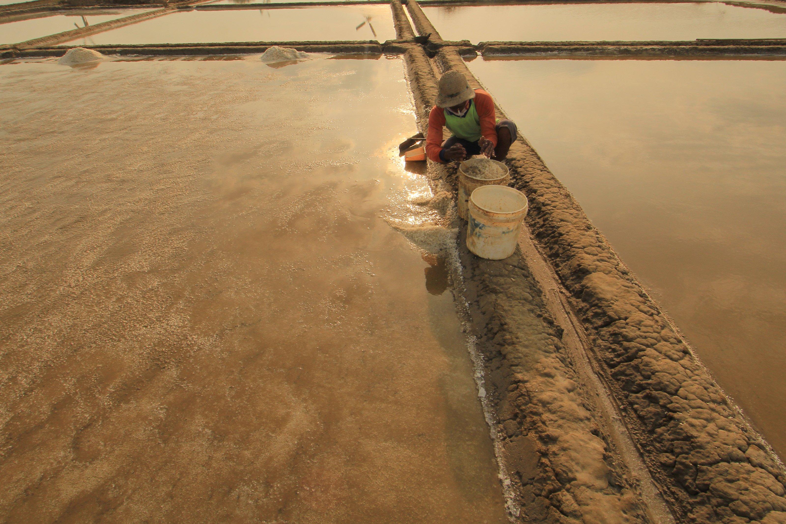 Petani harus pandai-pandai menakar air ke dalam petakan lahan, setelah itu air diuapkan di bawah terik matahari selama tujuh hari.