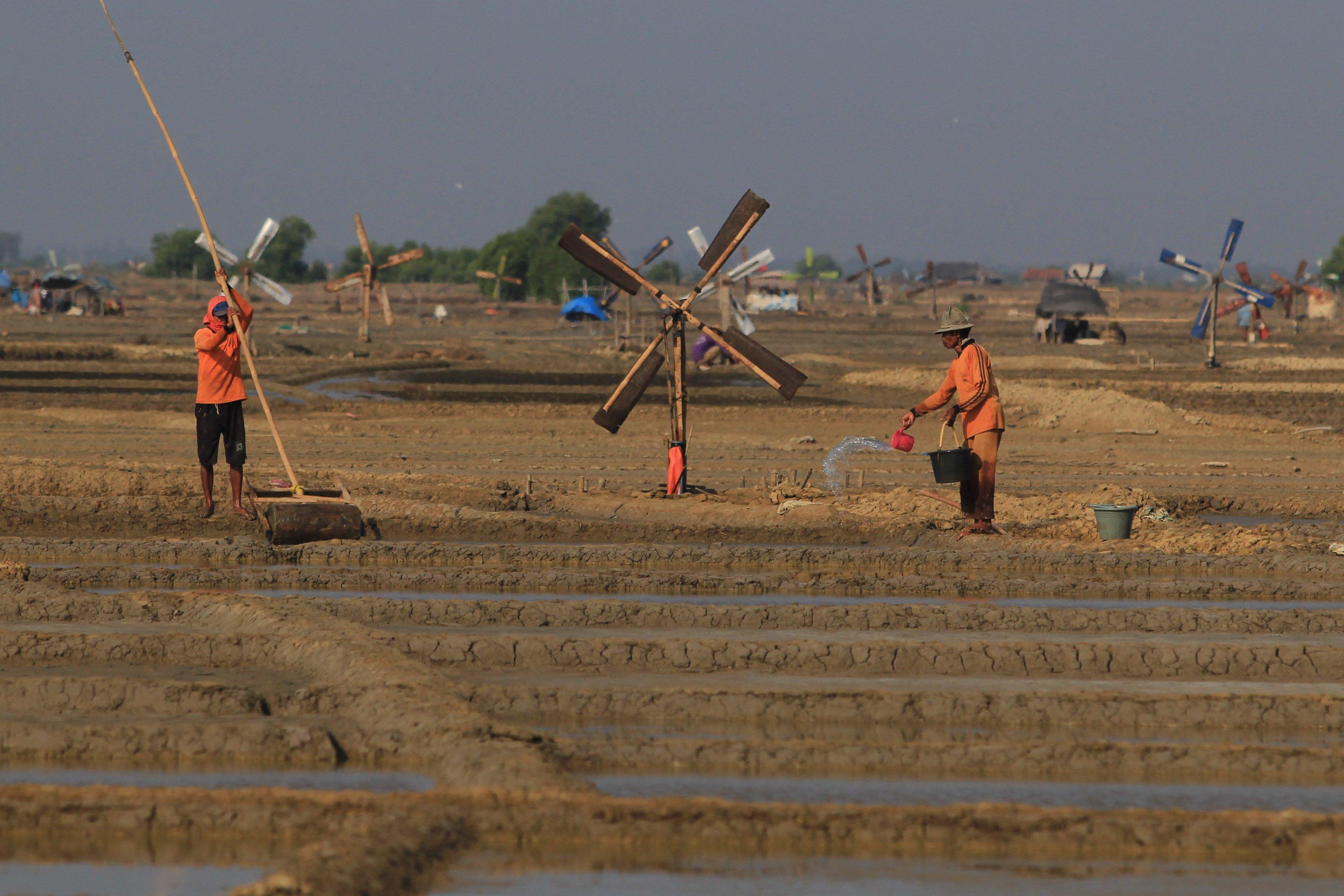 Sebelum dialiri air, petakan tanah yang akan digunakan sebagai lahan garam terlebih dahulu diratakan dengan alat penggiling dari semen dan bambu.