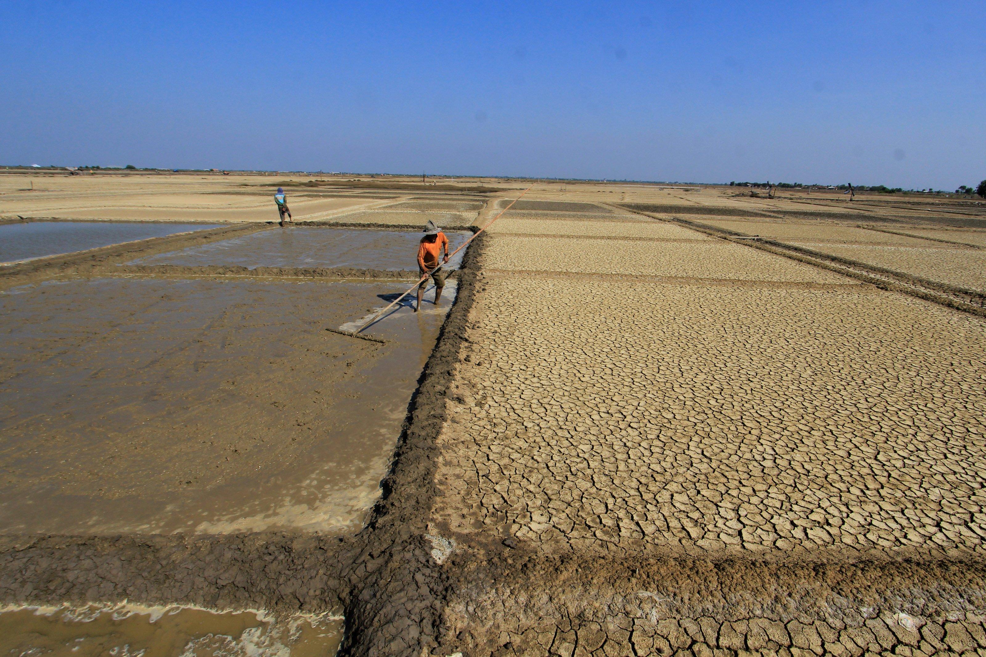 Terik matahari siang itu dirasa bagi petani garam tradisional di desa Santing kecamatan Losarang Kabupaten Indramayu sebagai awal yang baik untuk memulai proses produksi garam di lahan yang sebelumnya hampir setahun lebih terbengkalai.
