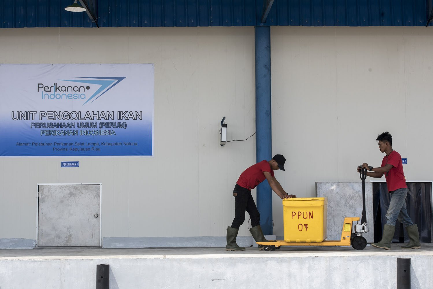 Pekerja membawa ikan menuju Cold Storage Unit Pengolahan Ikan Perum Perindo, Selat Lampa, Kabupaten Natuna, Kepulauan Riau, Kamis (3/8).