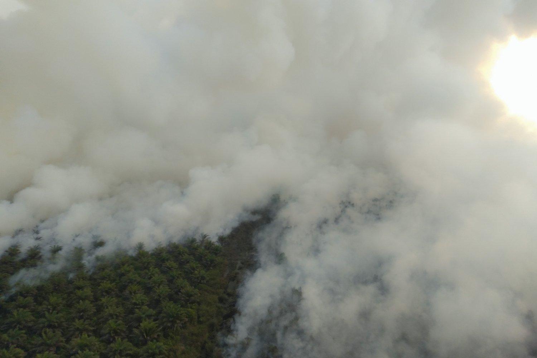Asap membubung dari lahan yang terbakar di Indralaya Utara, Ogan Ilir (OI), Sumatera Selatan, Jumat (13/9/2019). Berdasarkan pantauan satelit milik Lembaga Penerbangan dan Antariksa Nasional (LAPAN) terdapat 612 titik panas di Provinsi Sumatera Selatan dan 4.667 titik panas yang terdeteksi di sejumlah wilayah di Indonesia. \r\n