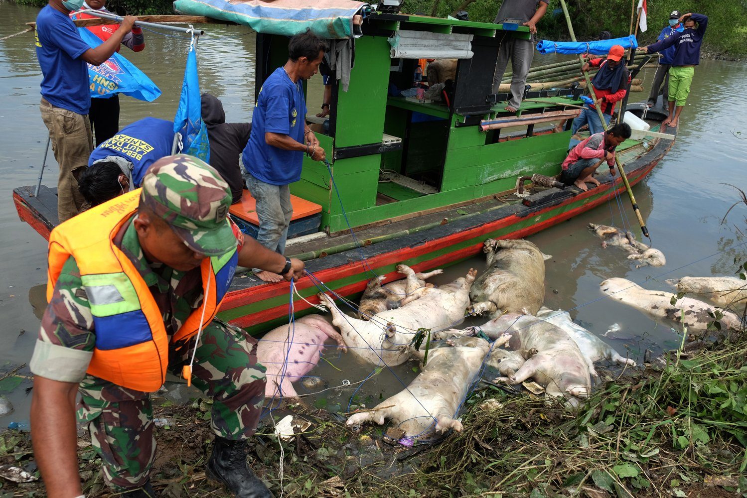 Data Dinas Ketahanan Pangan dan Peternakan Sumut mencatat sedikitnya ada 4.682 babi mati yang diduga akibat wabah virus Hog Kolera dan African Swine Fever atau demam babi Afrika di 11 kabupaten/kota di Sumut.