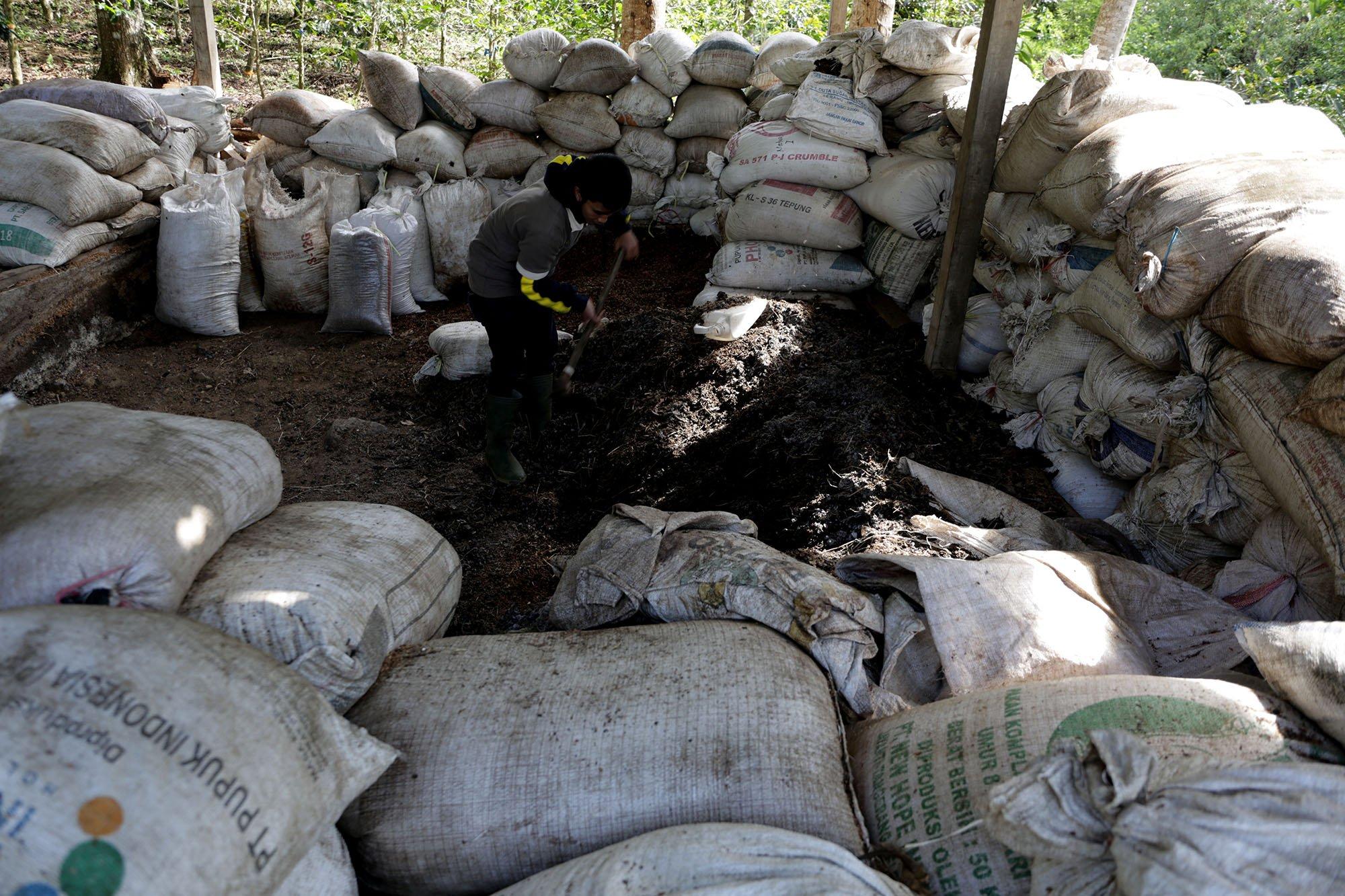 Pupuk merupakan faktor penentu kualitas kopi. Di perkebunan Mountain Malabar Coffee, pupuk organik dibuat sendiri (15/11/2019).