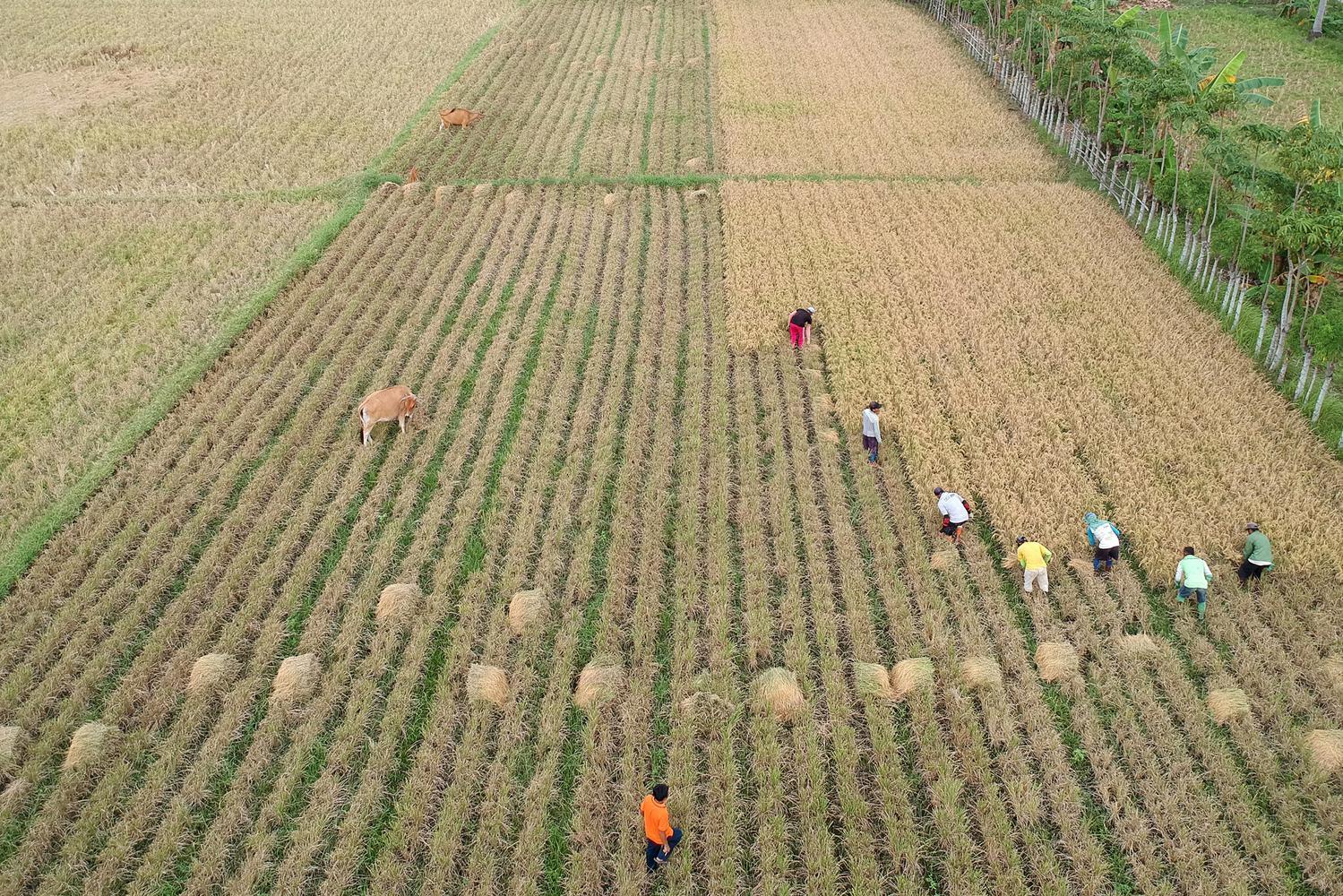 Krisis Pangan Dunia Menghantui Indonesia