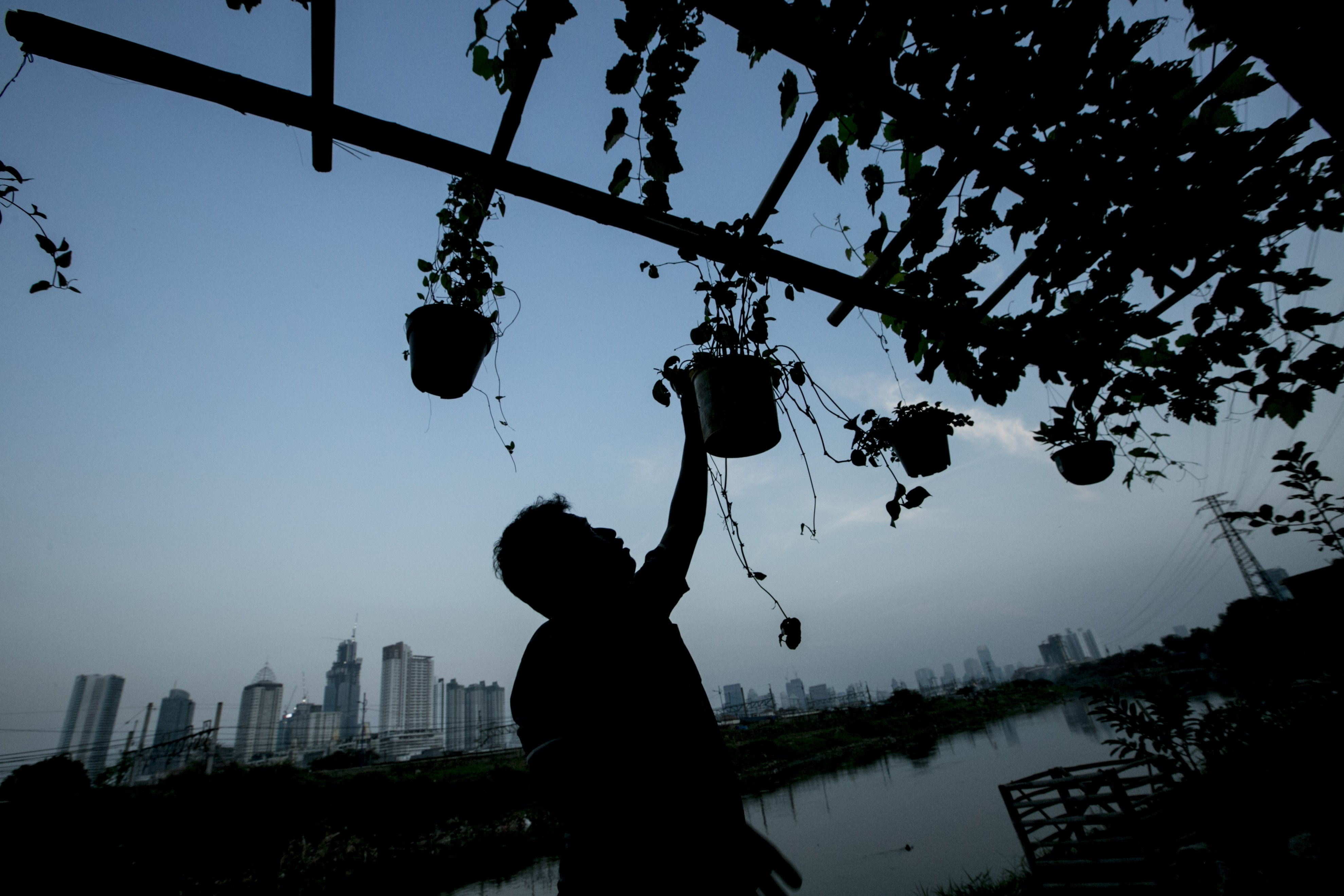 Ondi (44) menyiram tanaman di bantaran Sungai Ciliwung, Petamburan, Jakarta Pusat, Minggu (12/7/2020). Selama enam tahun ia memanfaatkan lahan bantaran kali Ciliwung untuk bertani bersama kelompok Mandiri Indah Tani sebagai upaya memenuhi kebutuhan hidup diatas keterbatasan lahan dan kemampuan.