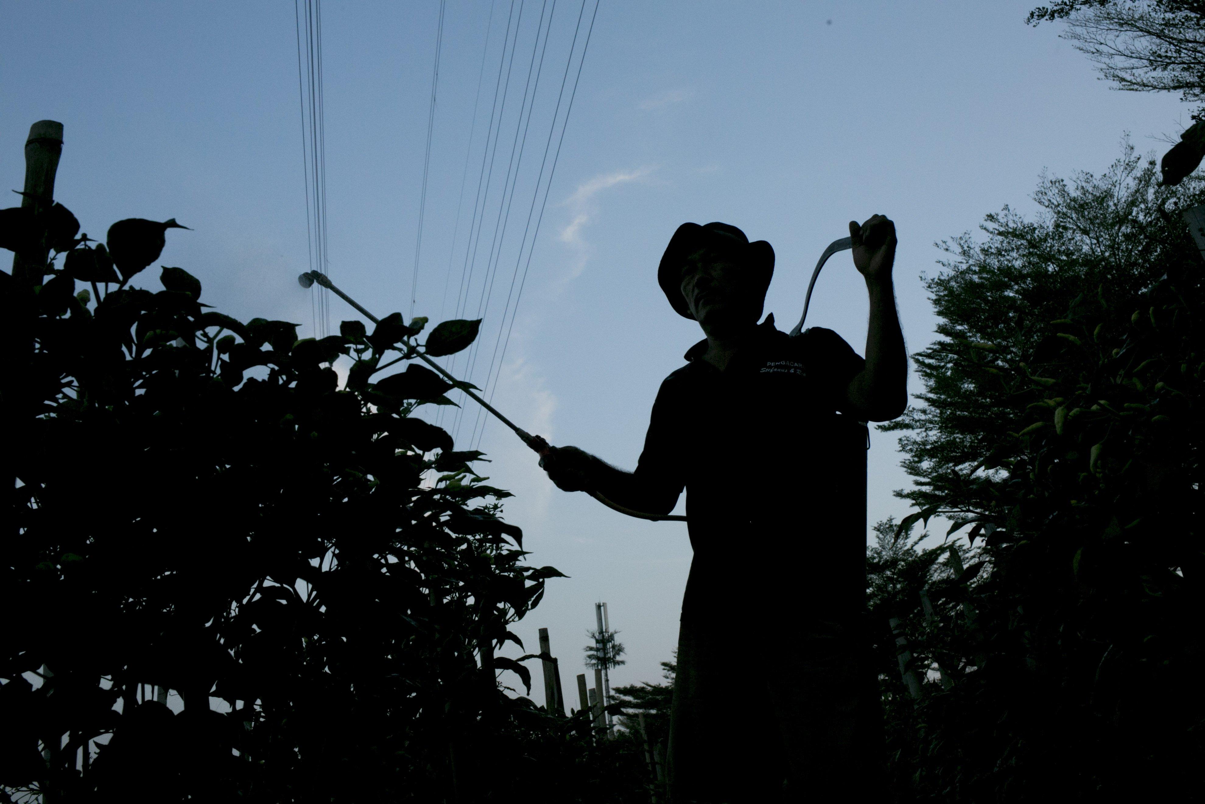 Andi (50) menyiram tanaman di bantaran Sungai Ciliwung, Petamburan, Jakarta Pusat, Minggu (12/7/2020). Selama enam tahun ia memanfaatkan lahan bantaran kali Ciliwung untuk bertani bersama kelompok Mandiri Indah Tani sebagai upaya memenuhi kebutuhan hidup diatas keterbatasan lahan dan kemampuan.