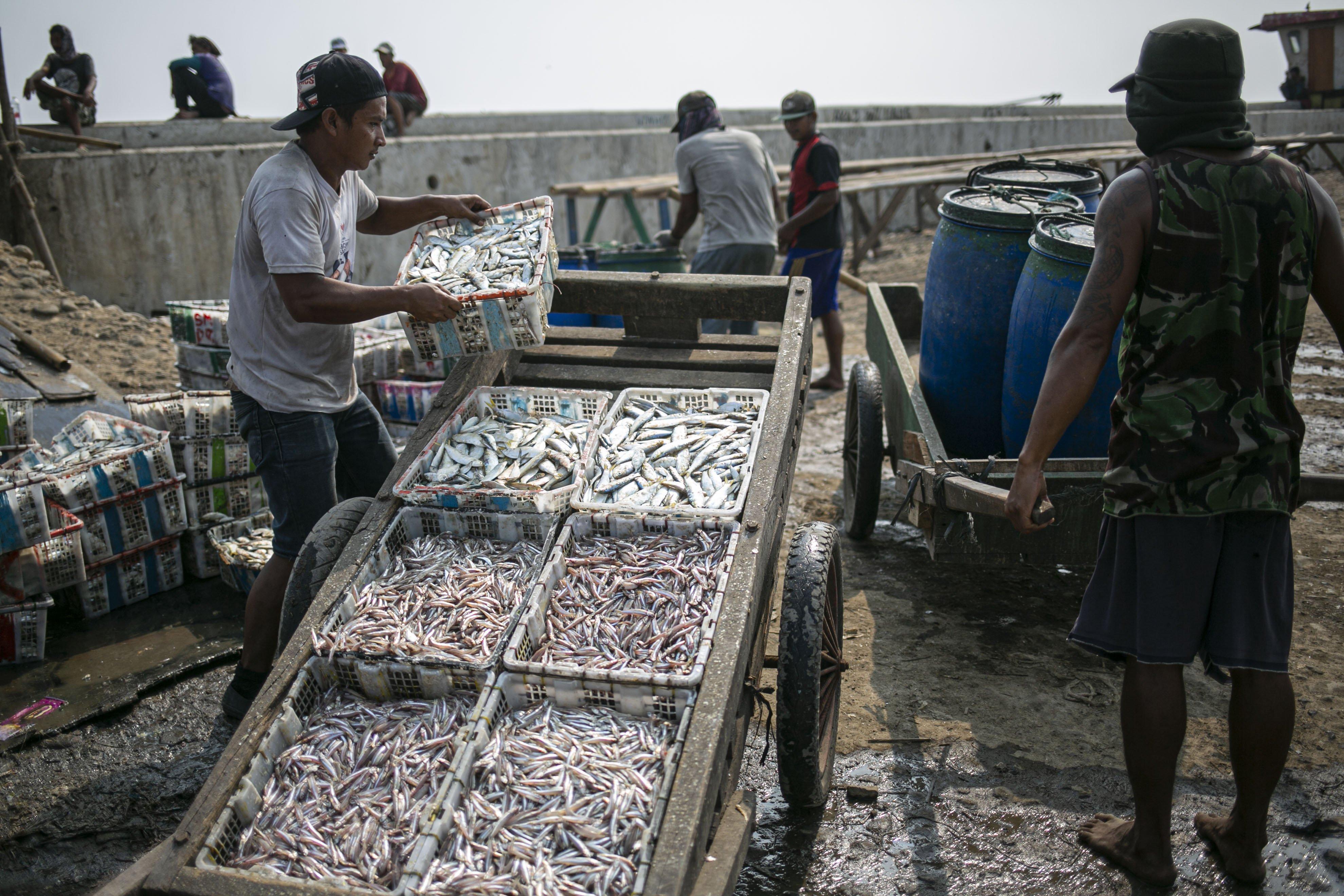 Sejumlah nelayan memilah ikan hasil tangkapan di Kampung Nelayan, Jakarta Utara, Minggu (9/8/2020). Kesatuan Nelayan Tradisional Indonesia (KNTI) mengklaim penurunan penjualan tangkapan nelayan mencapai 21 persen dan pendapatan hingga 90 persen akibat merebaknya virus covid-19.
