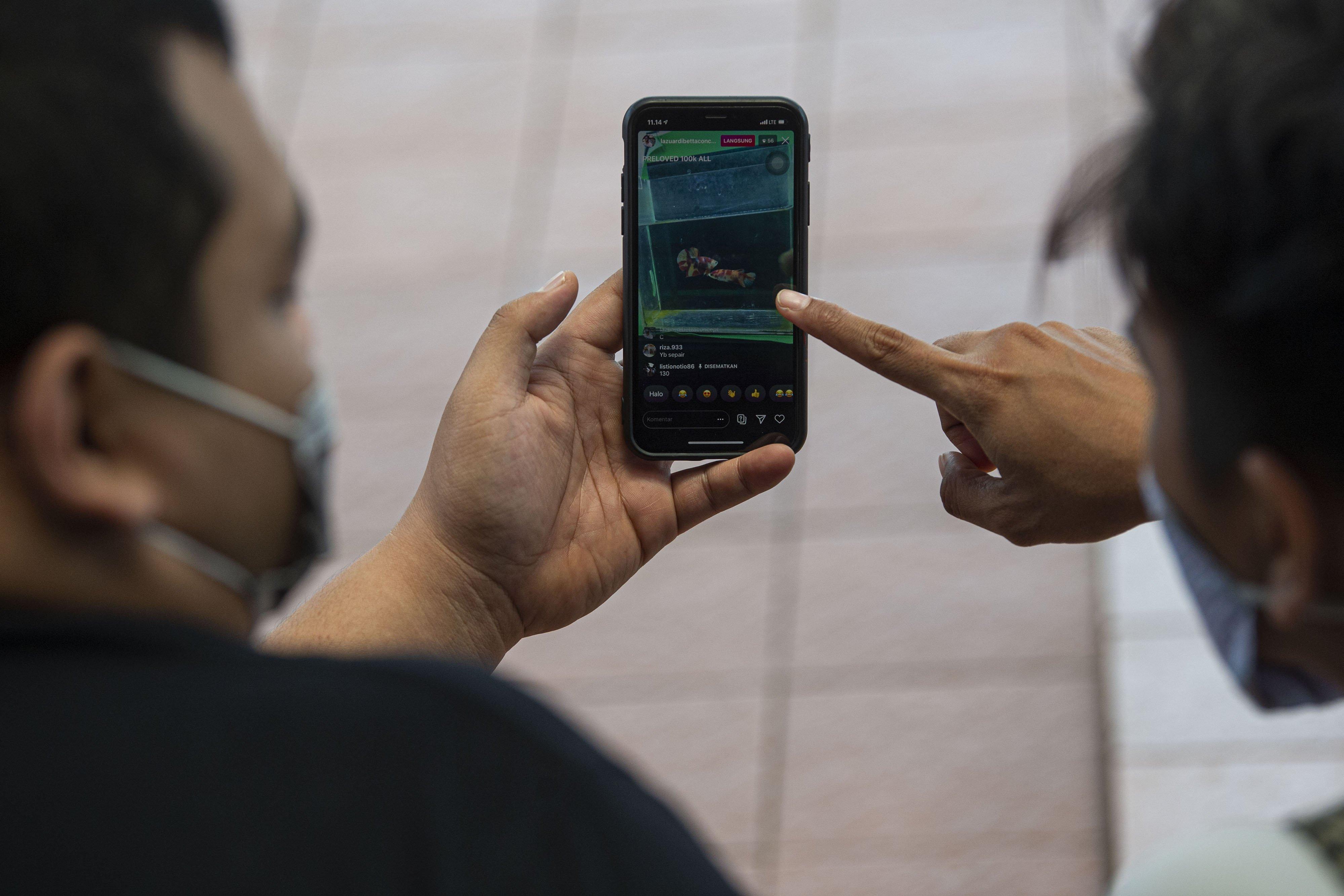 Penggiat bobi memelihara ikan cupang mengikuti lelang virtual melalui media sosial Instagram pada gawai miliknya di Jakarta. \r\n