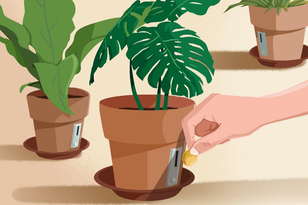 tanaman hias, bisnis tanaman hias, hobi tanaman hias, pandemi corona