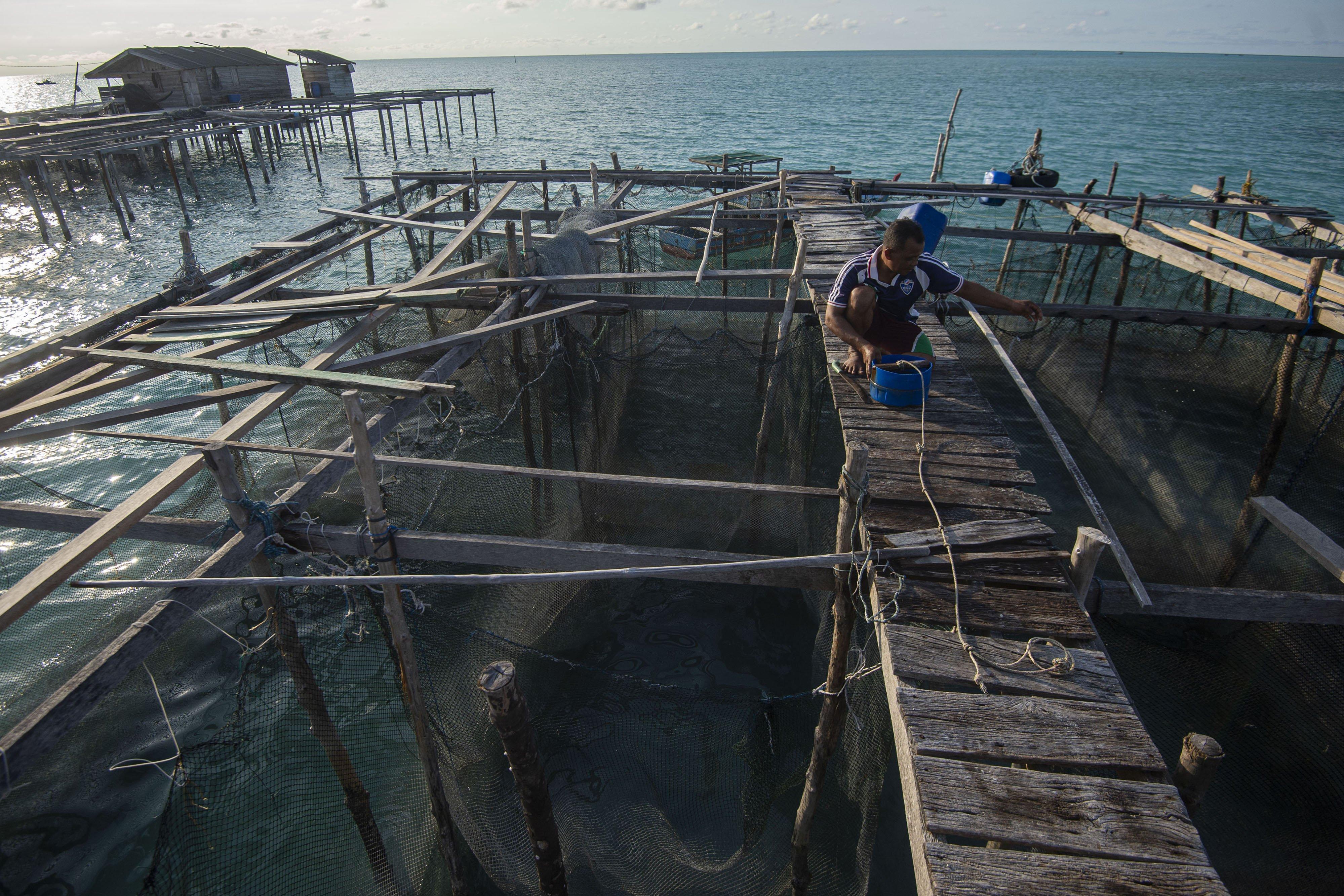 Warga memberi makan ikan kerapu di keramba miliknya di perairan dekat Pulau Laut, Kabupaten Natuna, Kepulauan Riau.\r\n