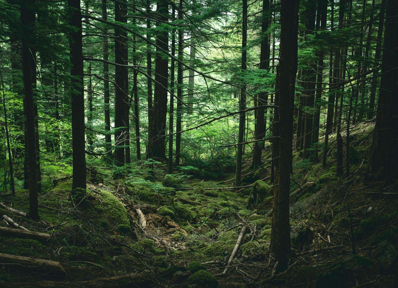 Nasib Hutan di Tengah Pilkada