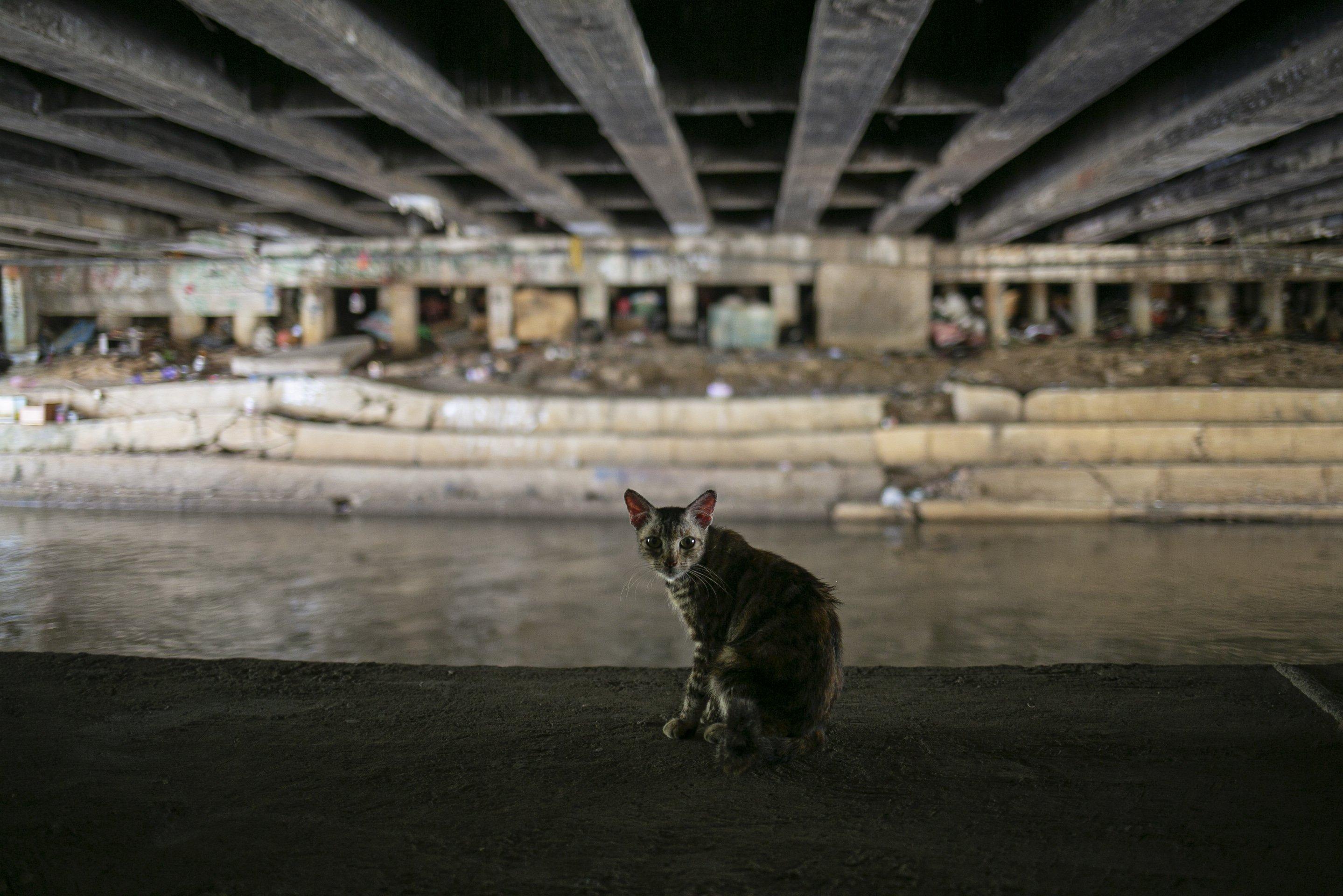 Kucing di kolong jembatan Jalan Proklamasi, Pegangsaan, Menteng, Jakarta, Selasa (28/12/2020). Kurang lebih sebanyak 12 hunian liar ditertibkan oleh petugas dari Kelurahan Pegangsaan, setelah sebelumnya Menteri Sosial Tri Rismaharini melakukan sidak di kolong jembatan tersebut.