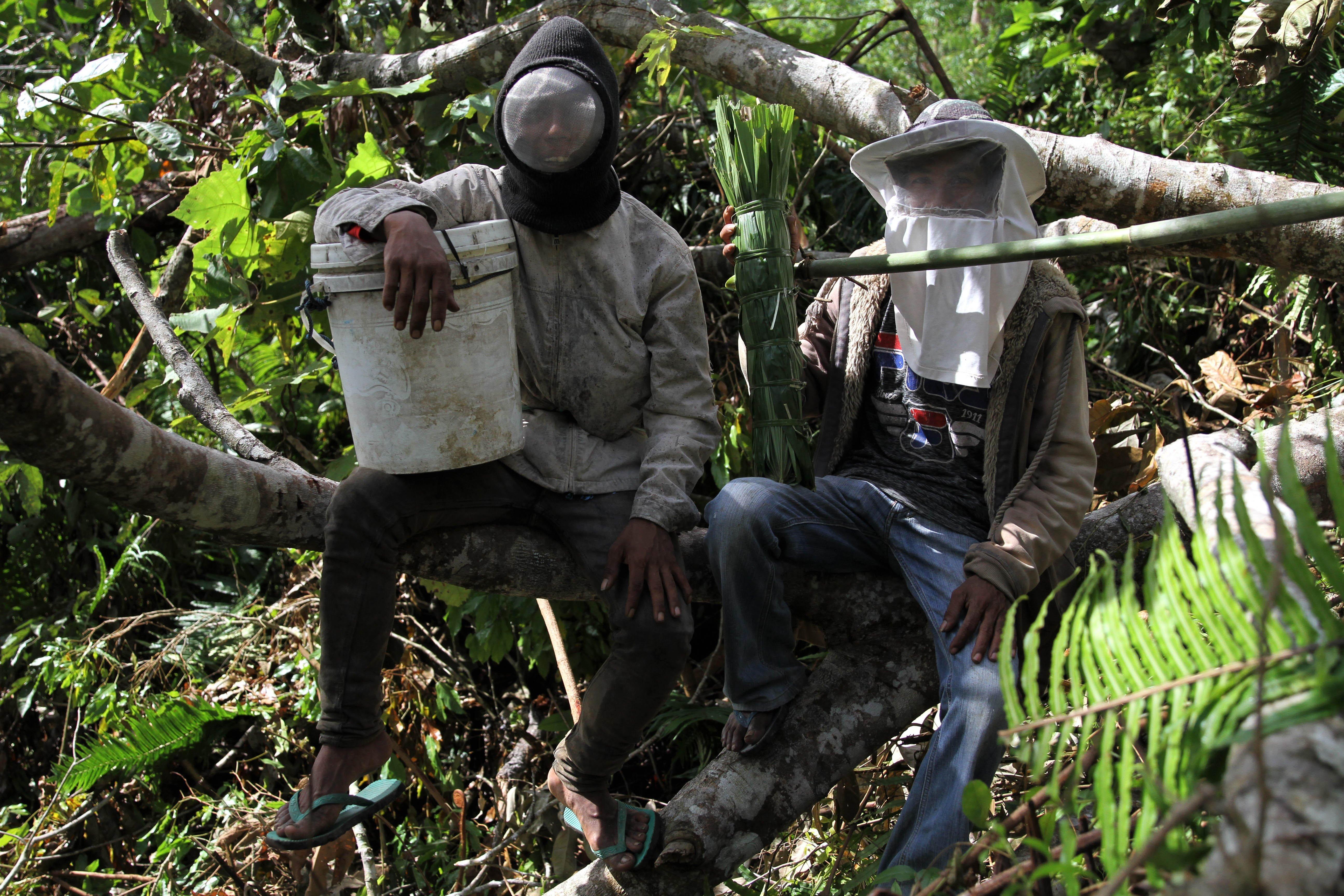 Bartono (kiri) dan Triono (kanan) bersiap memanen lebah madu di kawasan Gunung Landono di Desa Landono 2, Kecamatan Landono, Konawe Selatan, Sulawesi Tenggara.