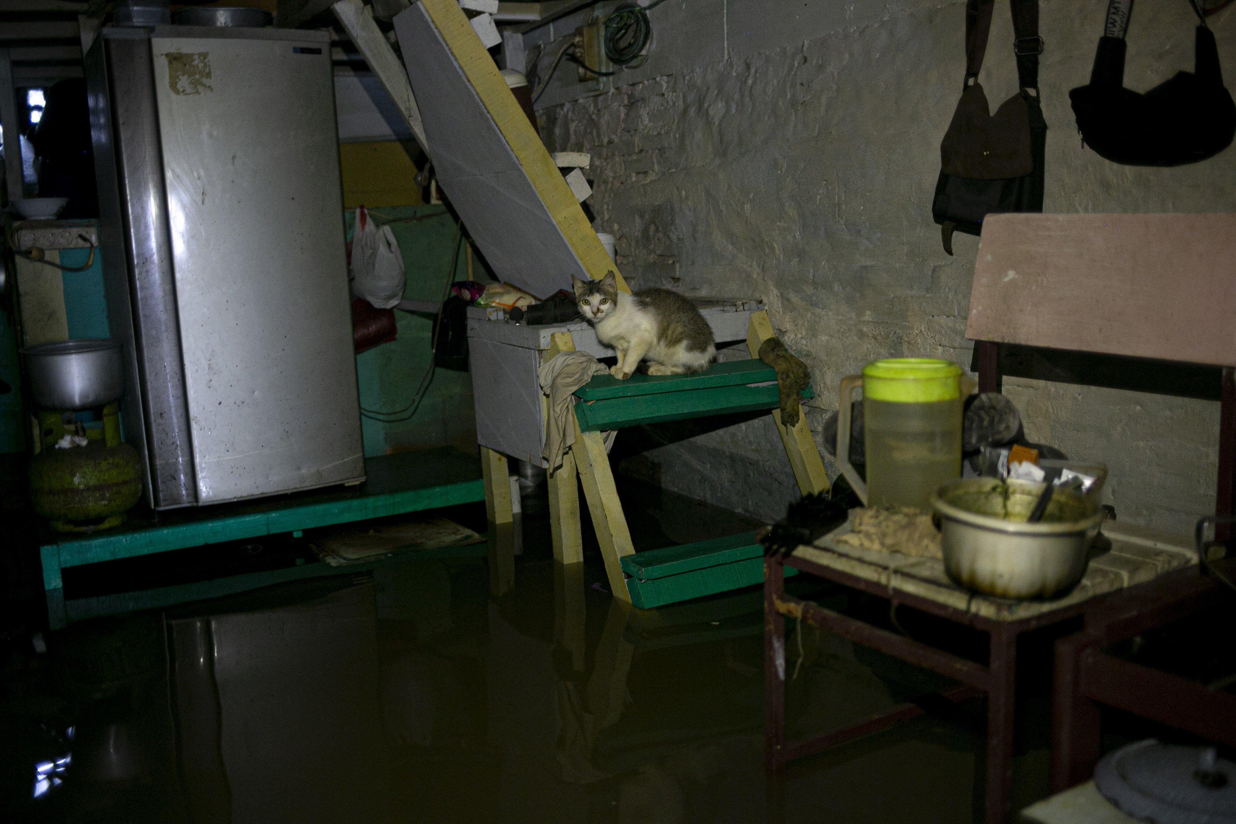 Seekor kucing terjebak banjir di kawasan Cipinang Melayu, Jakarta Timur, Jumat (19/2/2021). Banjir di kawasan tersebut akibat curah hujan yang tinggi dan meluapnya air dari Kali Sunter.