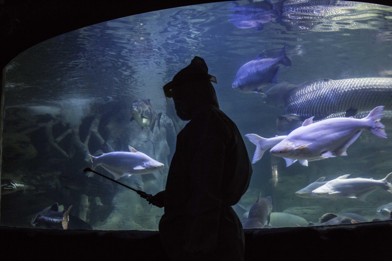 Akan Dibuka Kembali, Sea world Disemprot Disinfektan