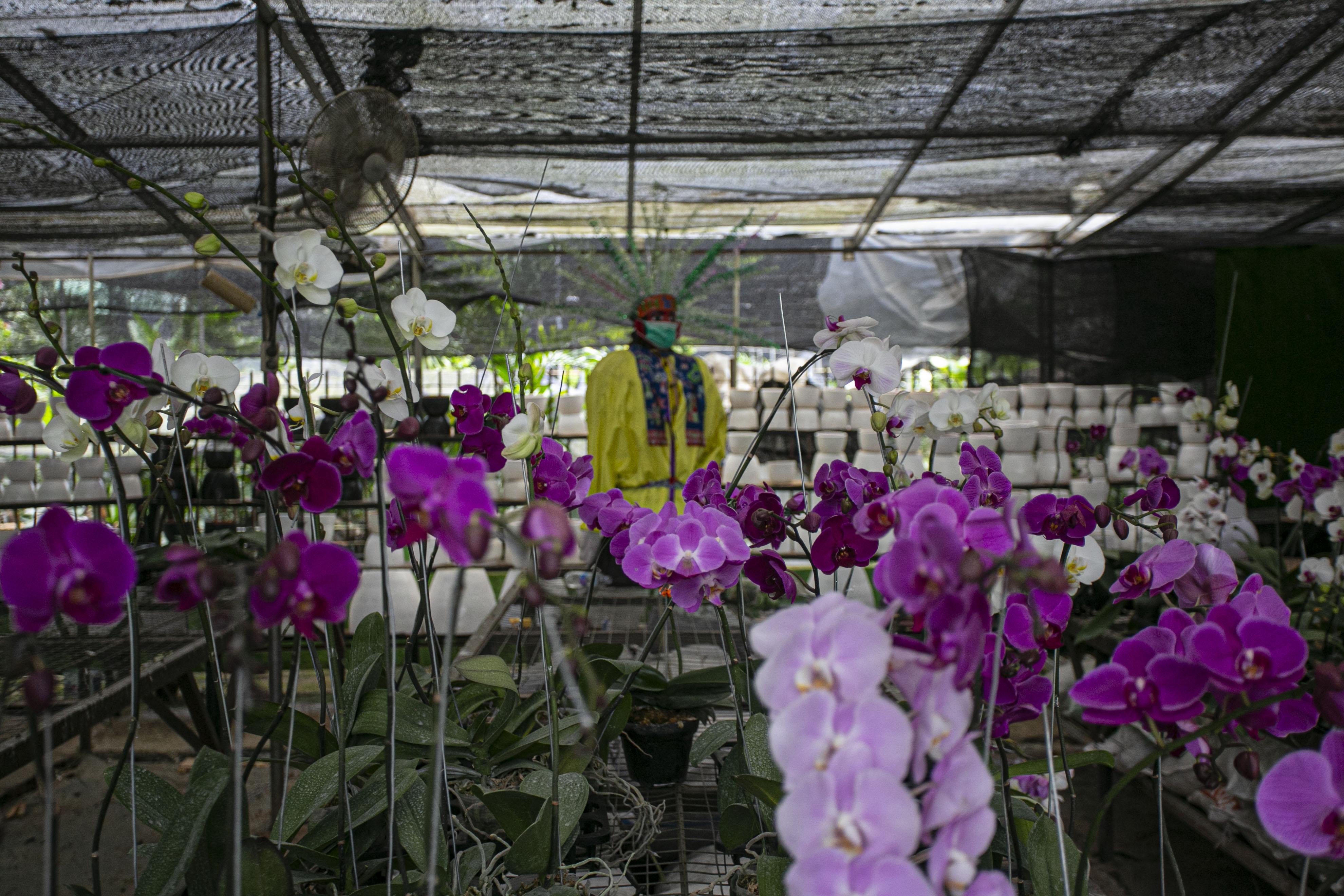 Peningkatan Penjualan Tamanan Hias