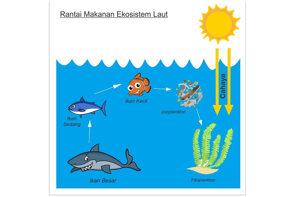 Gambar Rantai Makanan dalam Ekosistem Laut