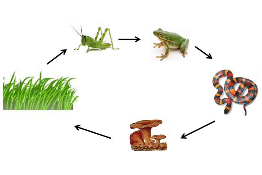 Gambar Rantai Makanan dan Proses Makan Dimakan dalam Ekosistem