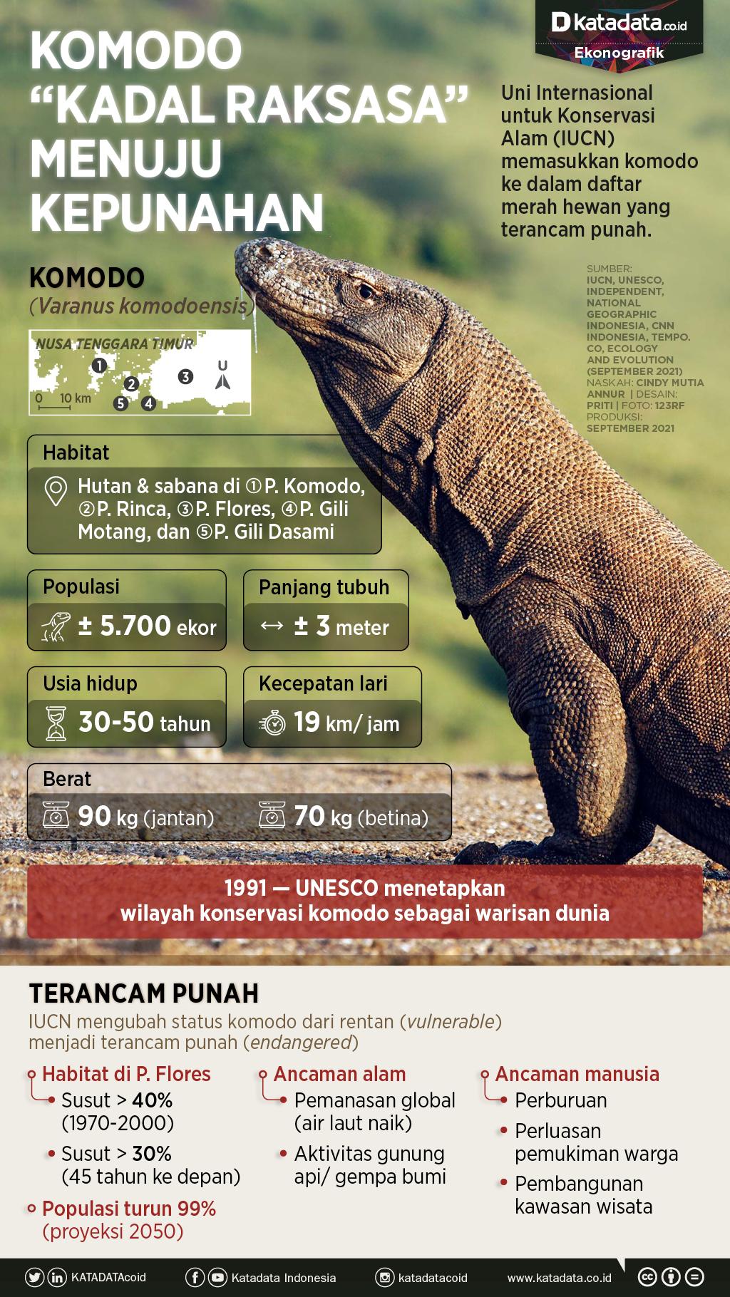 Infografik_Komodo kadal raksasa menuju kepunahan