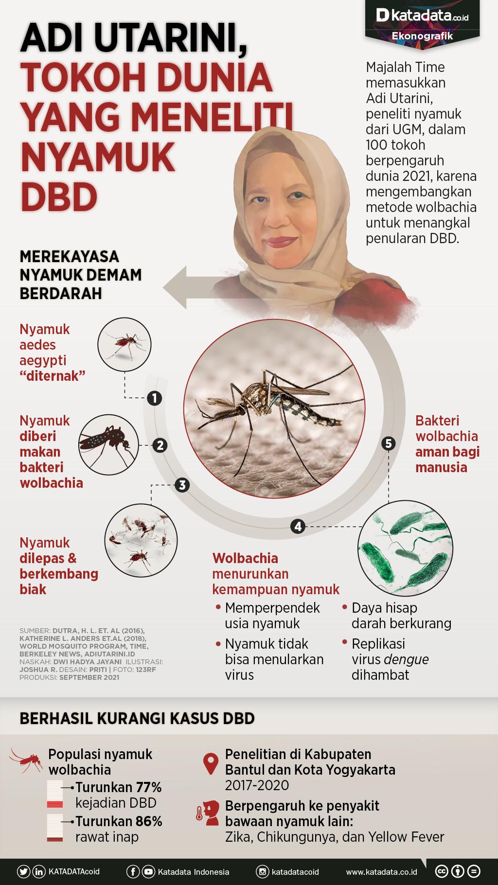 Infografik_Adi Utarini tokoh dunia yang meneliti nyamuk dbd