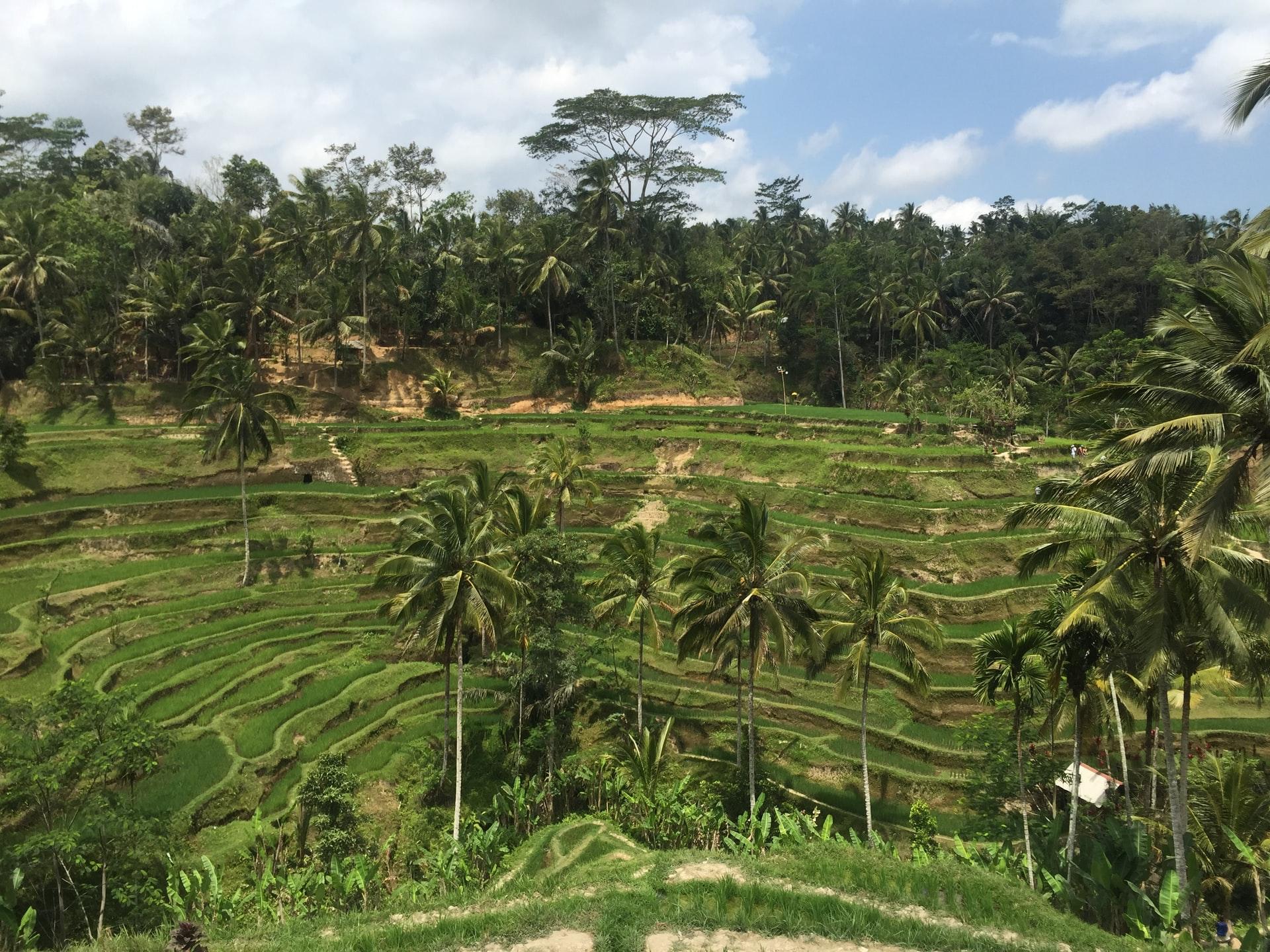 Teras Sawah Tegalalang di Bali