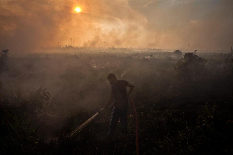 Jokowi kalah gugatan kebakaran hutan, Jokowi melawan hukum