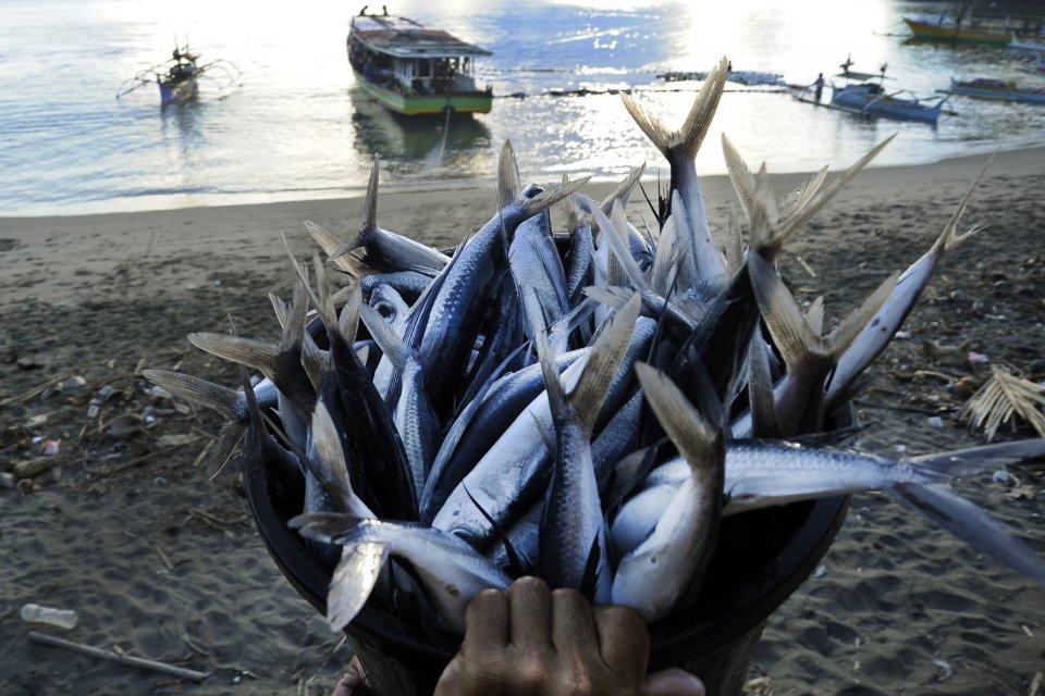 Ikan nelayan