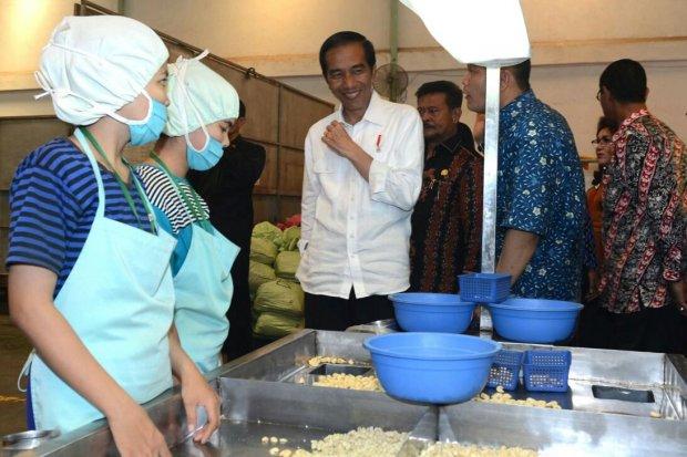 Jokowi Kacang Mete