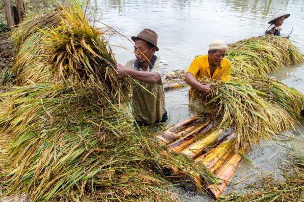 Pertanian rusak karena banjir