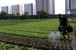 Bertani di Kota