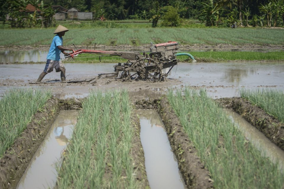 Ilustrasi lahan pertanian. Petani membajak sawah di area persawahan. Wilayah perbatasan memiliki potensi lahan seluas 5 hektare yang dapat dikembangkan menjadi lahan pertanian dan perkebunan.