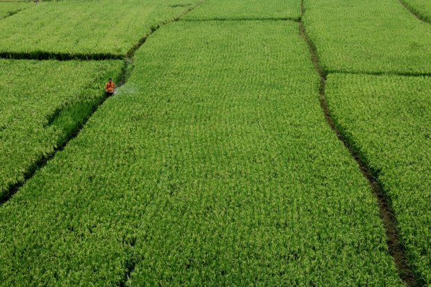 Seorang petani menyemprotkan racun pembasmi hama di persawahan Desa Tana Harapan, Kecamatan Rilau Ale, Kabupaten Bulukumba, Sulawesi Selatan, Kamis (16/3). Pemerintah Provinsi Sulawesi Selatan menargetkan pencetakan sawah baru pada 2017 seluas 2.500 hekta