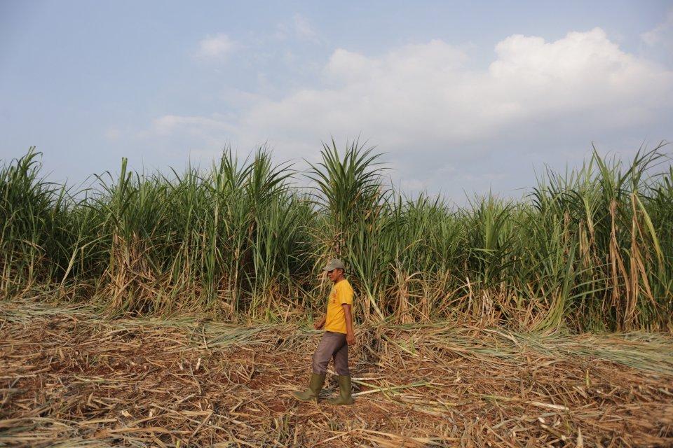 Indonesia Iran Jajaki Kerja Sama Investasi Di Sektor Pertanian