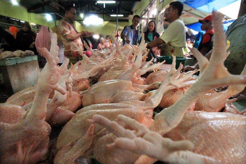 Peternak menolak impor daging ayam Brasil