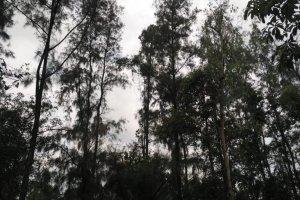 Hutan Tambang Adaro