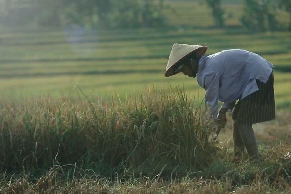 Undang-Undang Sistem Budidaya Pertanian Berkelanjutan (UU SBPB) dinilai sebagai bentuk pengingkaran terhadap tradisi pertanian, yang melekat dalam kehidupan petani.