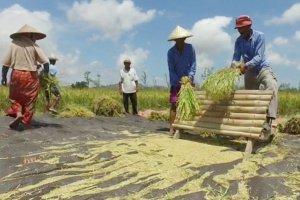 Petani desa Banyu Urip