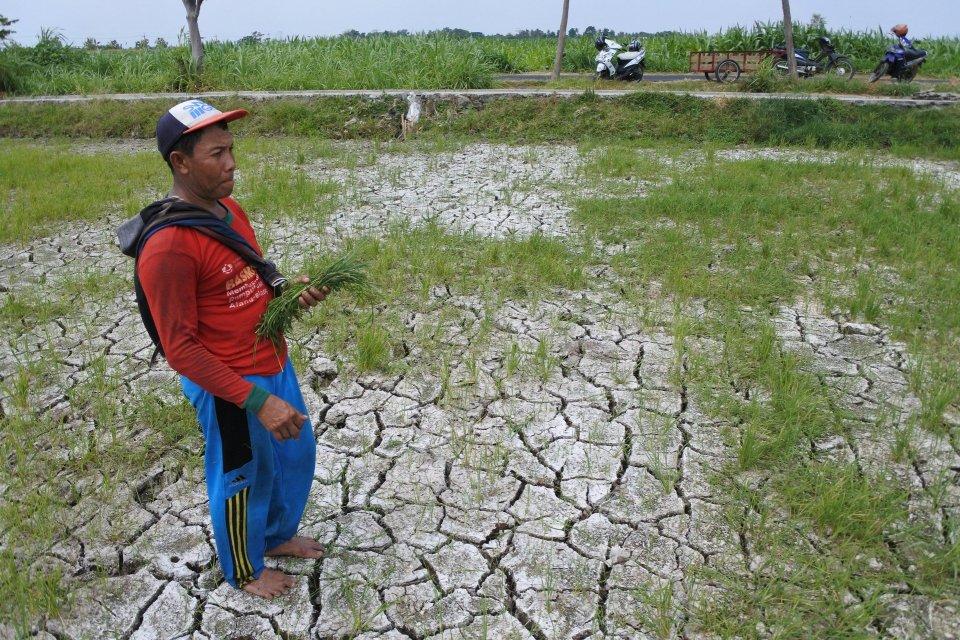 petani gagal panen, musim kemarau, Kementerian PUPR, kekeringan