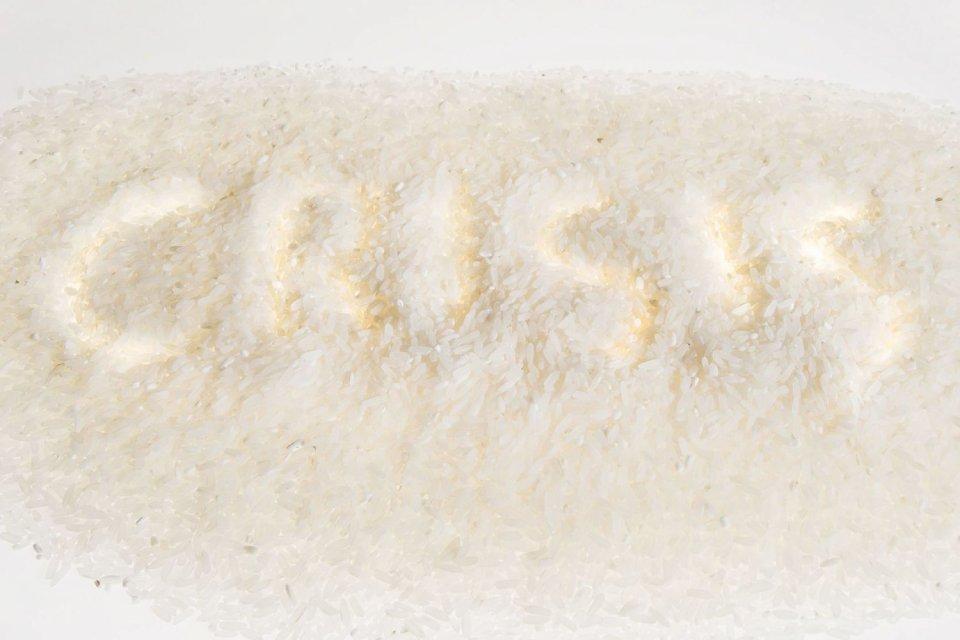 Rice, the staple food