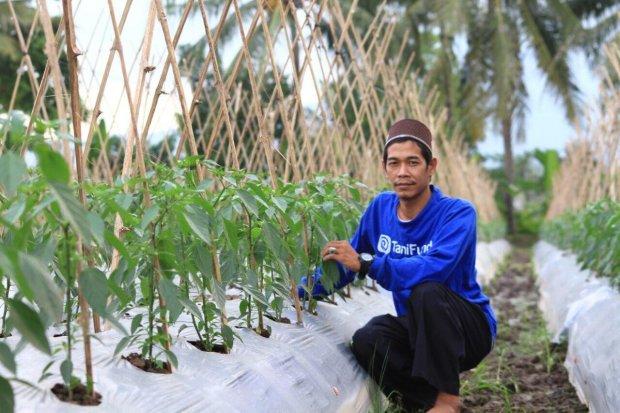startup Tanihub target menggaet 1 juta petani tahun depan
