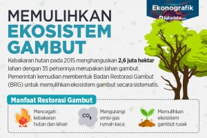 Memulihkan Ekosistem Gambut