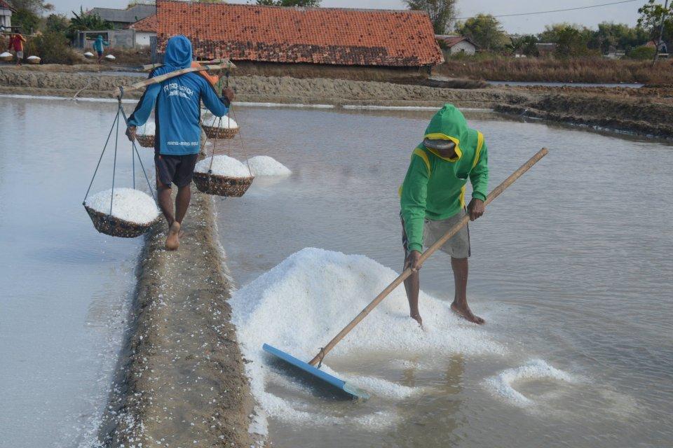Sebanyak 11 perusahaan akan menyerap 1,1 juta ton garam lokal.