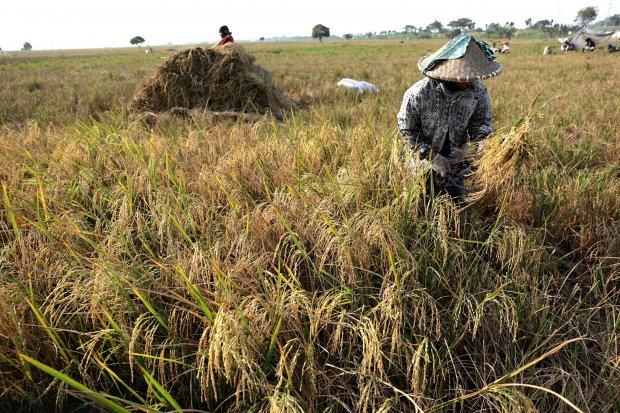 Akademisi dan Anggota DPR mencatat, pembangunan infrastruktur menggerus lahan pertanian