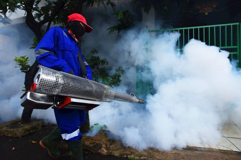 virus chikungunya, demam chikungunya, penyakit chikungunya, bedanya chikungunya dengan dbd, demam chikungunya dan dbd, chikungunya menyebar di bogor, nyamuk demam berdarah, nyamuk chikungunya