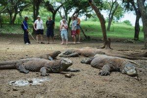 Edsus Pariwisata_Taman Nasional Komodo