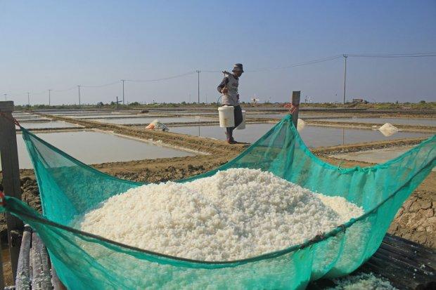 Petani memanen garam di Losarang Indramayu, Jawa Barat, Kamis (1/8/2019). Petani garam daerah tersebut mengeluhkan anjloknya harga garam dari harga Rp400 per kilogram menjadi Rp150 per kilogram.