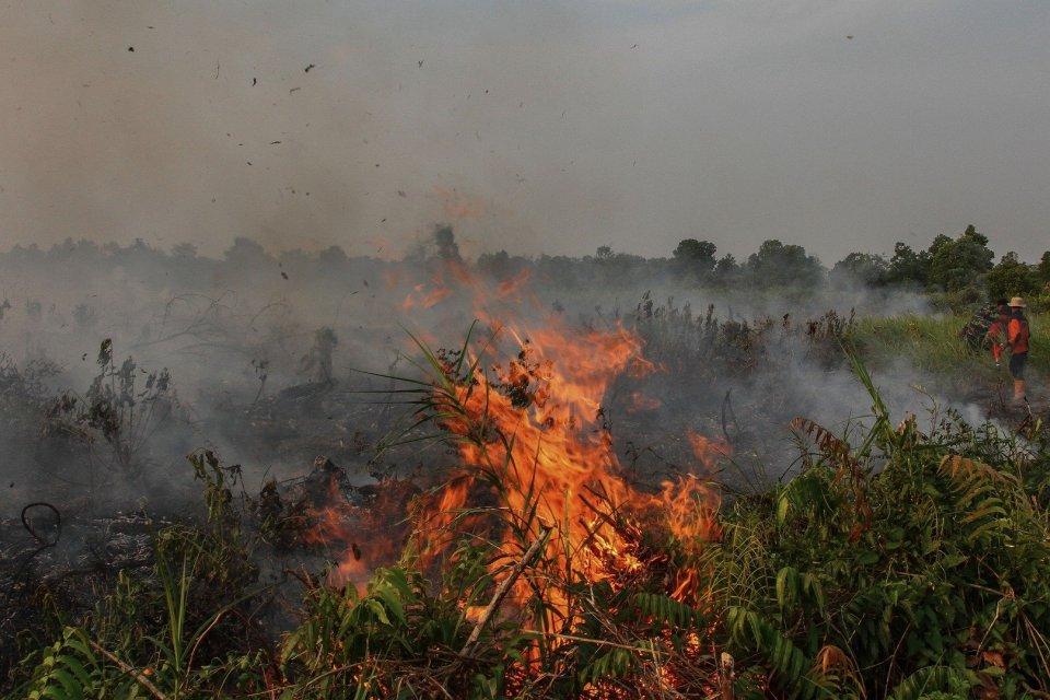 Petugas Badan Penanggulangan Bencana Daerah (BPBD) Kota Pekanbaru dibantu Masyarakat Peduli Api (MPA) berusaha memadamkan kebakaran lahan gambut di Pekanbaru, Riau, Sabtu (3/8/2019). Cuaca panas yang membuat sumber air menjadi kering di dekat lokasi lahan